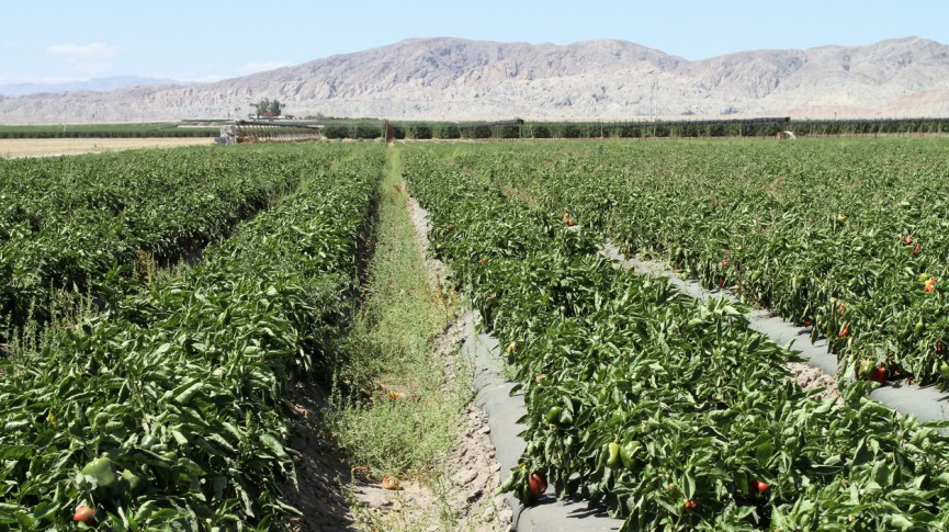 photo of crops in the coachella valley in california